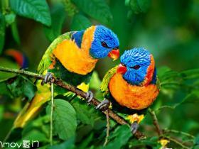 说闽南语的神奇鹦鹉