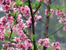 忠仑公园:正是一年桃花盛开时