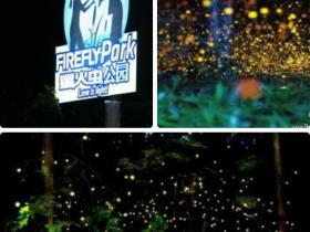 最新消息:厦门荧火虫公园,今年仍将开放