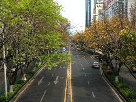 【厦门街景】一边是春天,一边是秋天。