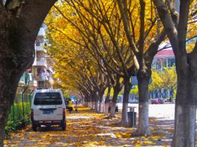 一个永远不乏浪漫的城市·邂逅落叶