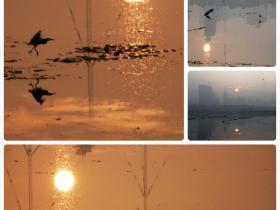 海沧湖晨光中的海鸟