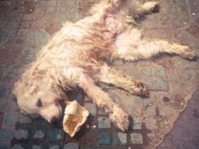 心痛:一只被遗弃的狗