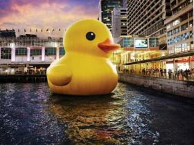 嘎嘎嘎!大黄鸭真的来啦!大黄鸭正式登陆厦门海沧啦