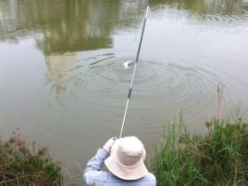 集美大学湖里惊现超大鱼精