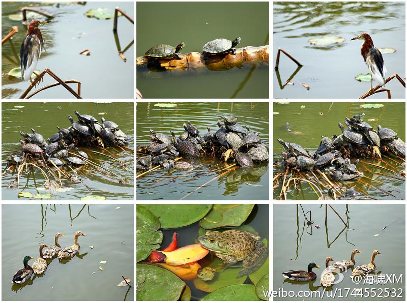 南普陀·荷花池里的春天