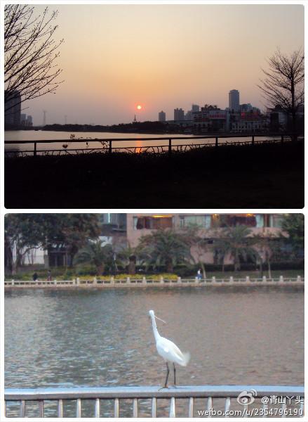 筼筜湖的落日·白鹭觅食