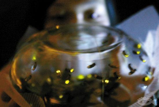 这个夏天,一起到厦门看萤火虫吧