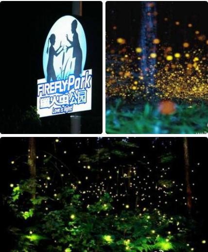 厦门萤火虫主题公园预约电话、地址
