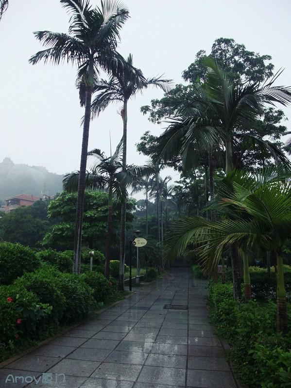 印象厦门·被雨滴叫醒的鼓浪屿