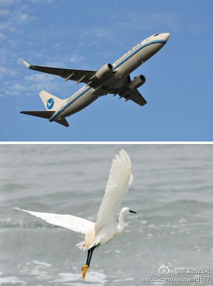 【航空摄影】厦门铁鸟VS水鸟·俩白鹭谁更帅气?