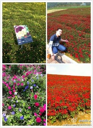玛琪雅朵花海·四季皆有花