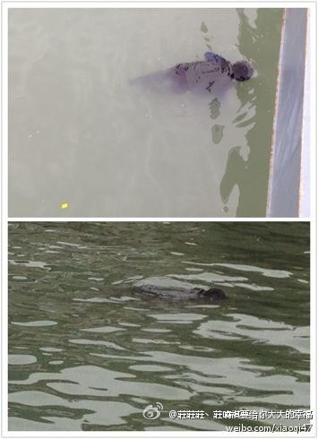 (快讯)厦门旅游客运码头惊现浮尸