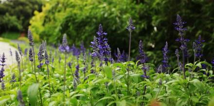 忠仑公园:像花儿一样生活