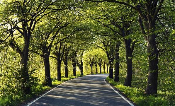 厦门人行道自行车道将全部建成林荫小道