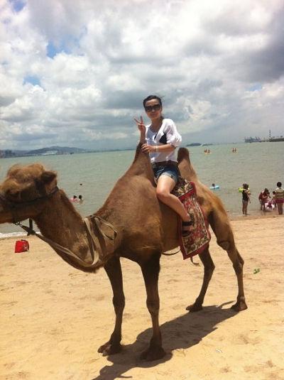 厦门环岛路海边的骆驼,你骑过吗?