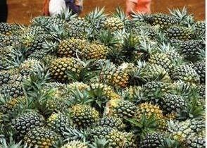 霸气厦门大学:2万元买菠萝吸教室异味