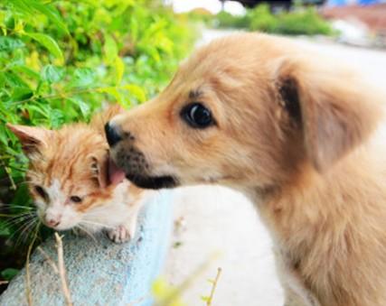 海沧街头:热恋中的小狗小猫