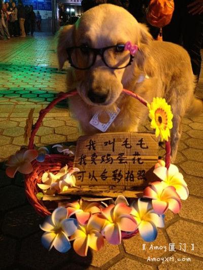 萌爆了:鼓浪屿惊现卖鸡蛋花的狗狗