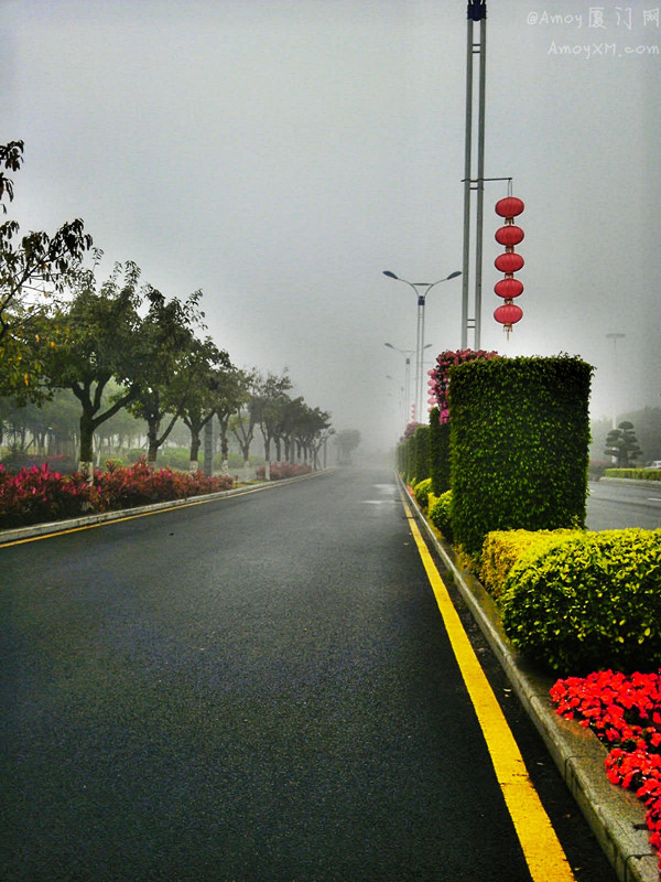 厦门今起大雾,一秒成仙境