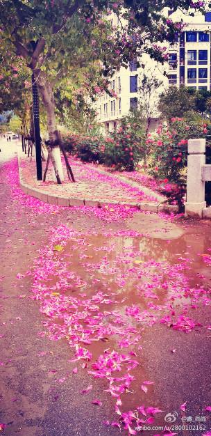 12月的厦门 :下雨落花不飘雪