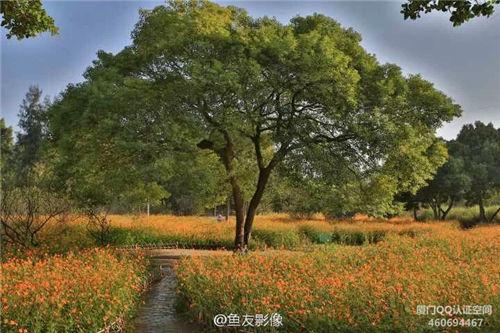 忠伦公园花开正艳 花海还将持续约20天 厦门漂亮的地方 Amoy厦门 5
