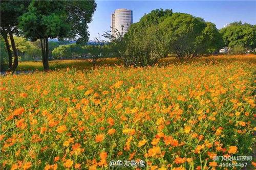 忠伦公园花开正艳 花海还将持续约20天 厦门漂亮的地方 Amoy厦门 3
