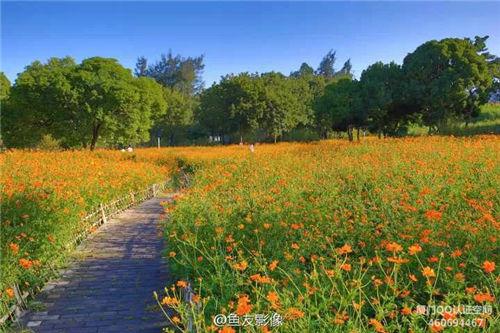 忠伦公园花开正艳 花海还将持续约20天 厦门漂亮的地方 Amoy厦门 2